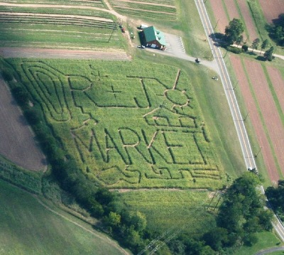 An aerial view of the 2007 6-acre corn maze!